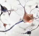 Neuro System Image
